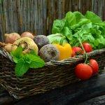 Nařízení vlády o stanovení podmínek pro poskytování podpory na dodávky ovoce, zeleniny, mléka