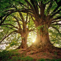 CO2 liga – celoroční program o ochraně klimatu