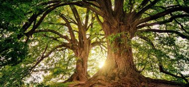 Můj strom a jeho příběh