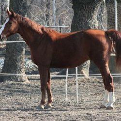 Kůň Gájus