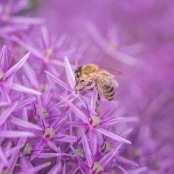 Včelařství aneb rojení v Rymicích